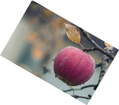 This example rotates a PNG picture of an apple hanging on a tree by π/6 radians (30 degrees) clockwise.