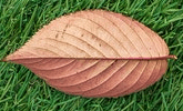 This example crops out a leaf from a larger PNG image. It specifies all four dimensions for the crop area - left position, right position, width, and height.