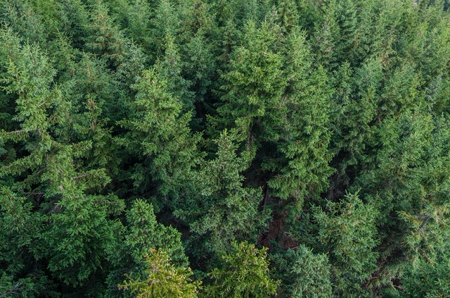 This example converts a PNG file with an aerial shot of a forest to Data URL text encoding scheme.